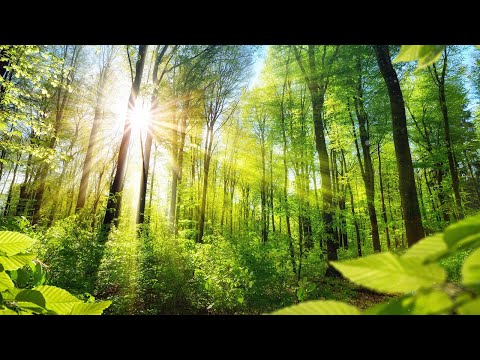 Relaxing Music for Stress Relief. Calm Celtic Music for Medi