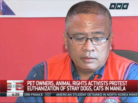 Animal welfare groups protest euthanization of stray dogs, cats in Manila