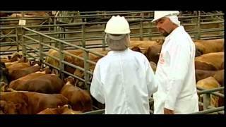 Baixar Association of brazilian beef exporters - ABIEC