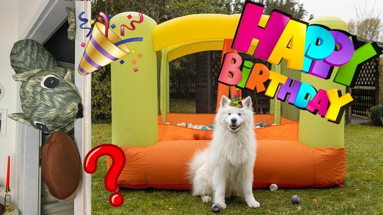 Felix' Dog Birthday Party | Wanderlust Samoyed