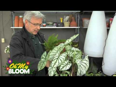 Plant varieties for a shaded container