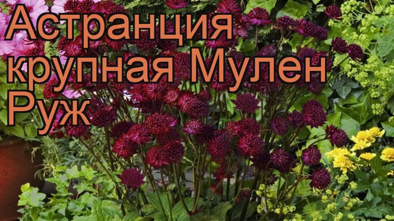 10 май 2018. Подпишись на канал https://goo. Gl/8ollnk ветеран войны высаживает кедры по всей россии. Вот уже 30 лет анатолий терехов таким.
