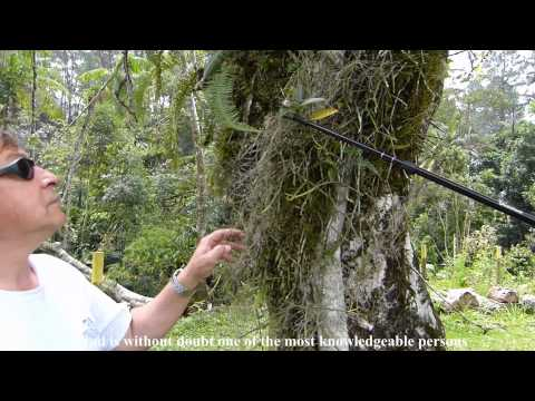 Guided tours in the Atlantic Rainforest