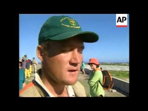 SOUTH AFRICA: OIL SPILL & PENGUIN COLONY LATEST (2)