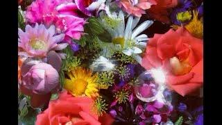 С Днем Рождения Елена🌹! Вселенского Счастья Леночка!красивая видео открытка с пожеланиями!🎂🎁🌹
