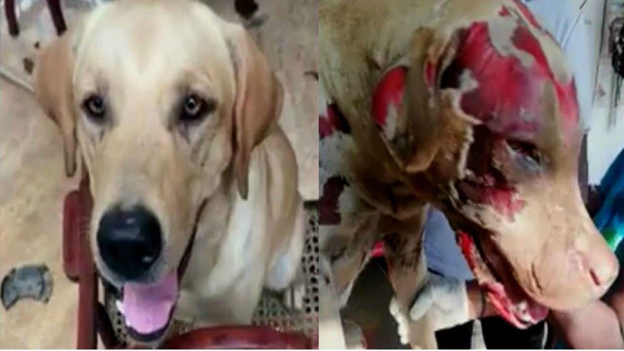 Download Dog burnt alive in Negombo