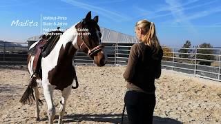 Madita - 5 Pferde 2 Wochen