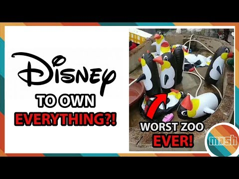 Disney Buying 20th Century Fox! (X-Men Finally in MCU?) & The Worlds WORST Zoo! (Mash News)