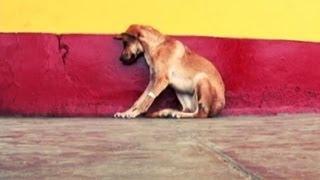 Los rescata perros: Casos de personas que atienden desinteresadamente a animales callejeros