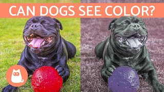 Can Dogs See Color? - How a Dog's VISION Works