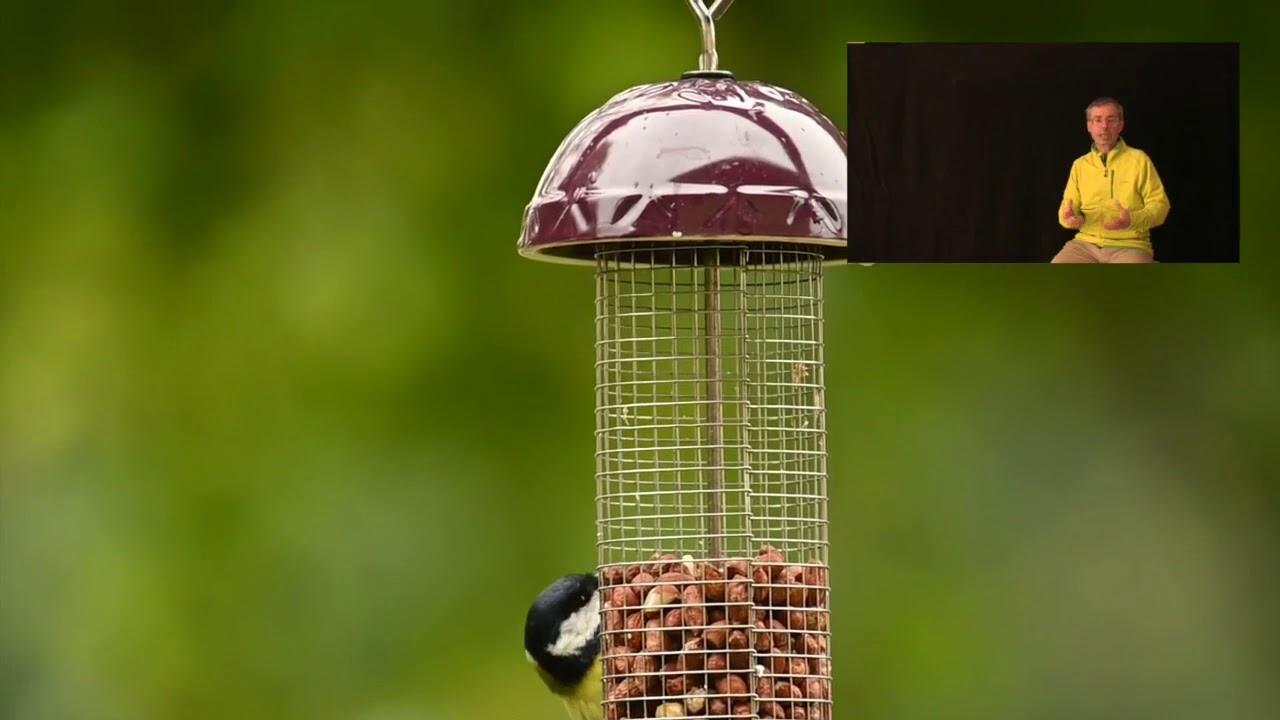 #birdgarden i vari tipi di mangiatoia