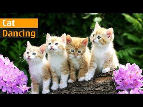 Funny Cat Dancing