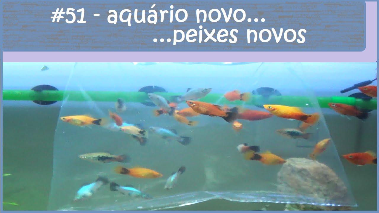 Aquário novo, peixes novos - #EP51