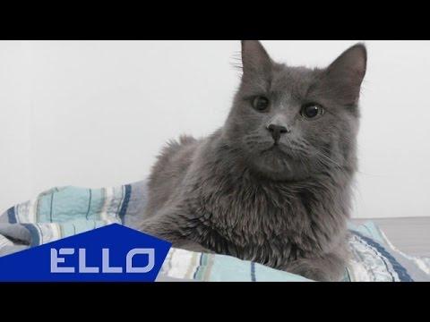 Coffee - Про кота / ELLO UP^ /