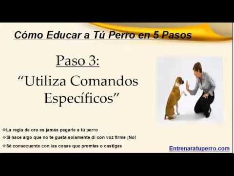 Como entrenar a un perro 5 pasos f ciles youtube - Como banar a un perro ...