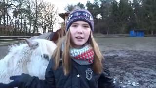 Erkenne ich meine eigenen Ponys???  HeyHorse