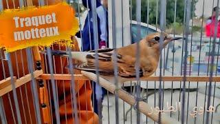 سوق طيور الزينة ب الحراش اليوم و حضور القزولة بشعار الى مكاش سوق نكوّنوه