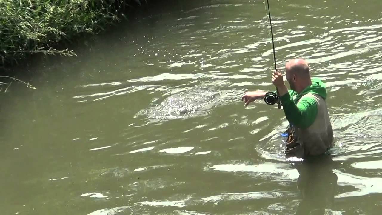 Fly fishing for smallmouth bass on very small river youtube for Fly fishing for smallmouth bass