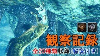 【MHWI】観察記録 全20種ムービー(老練の獣人族学者解説付き)