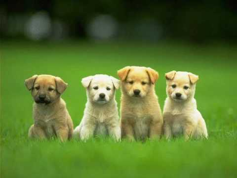 cute puppies-who let the dogs out