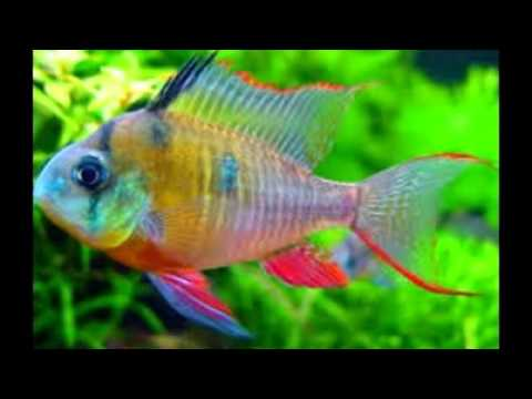 The Coolest Most Bad Freshwater Aquarium Fish Out There