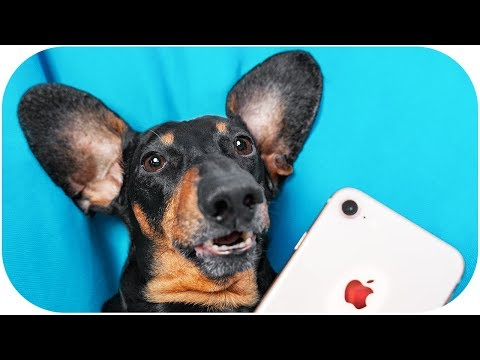 NO Gadget Day Challenge! Funny dachshund dog video!