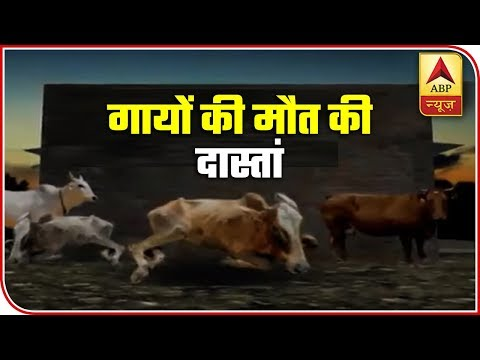 Over 500 Cow Deaths In UP Alone During Monsoon | ABP News