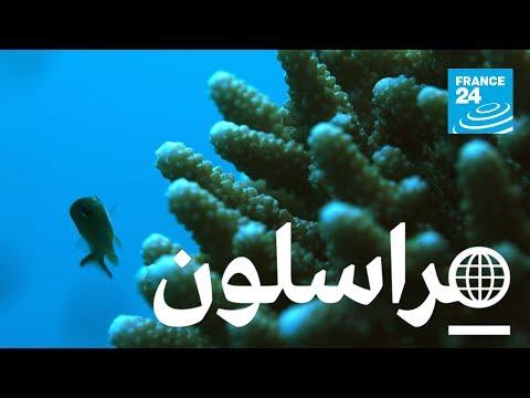 لحماية المرجان في البحر الاحمر  - نشر قبل 3 ساعة