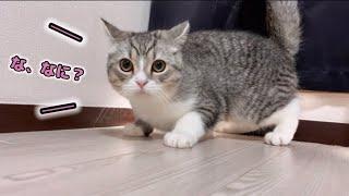 じ〜っと見つめるとキョドって固まっちゃう猫…笑!