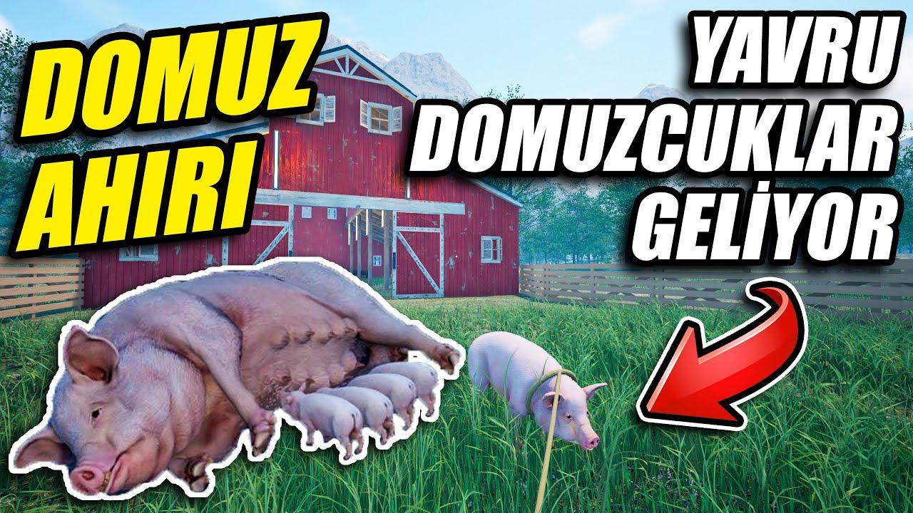 YENİ DOMUZ AHIRI KURUYORUZ // GELSİN YAVRU DOMUZCUKLAR🤣   RANCH SIMULATOR !!