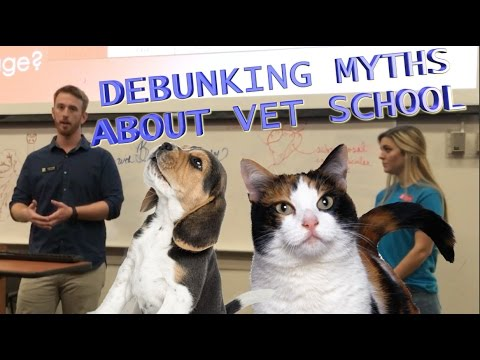 The TRUTH about Vet School   UGA Open House Vet Student Q&A 2017
