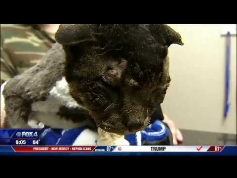 Cat tortured at Fort Worth cemetery possibly as part of sacrifice