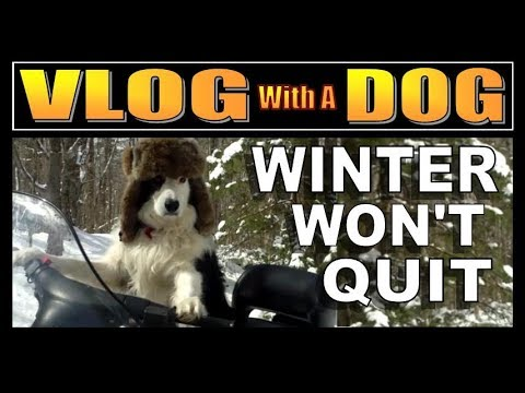 SCENES FROM OUR OFF GRID CABIN LIFE.   Vlog With A Dog, Episode 21