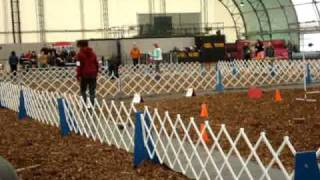 Rally Obedience Course Cr Dog Show Advanced Class 2010