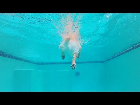 Swimming in the Rain with a Golden Retriever (SCS #100.5)