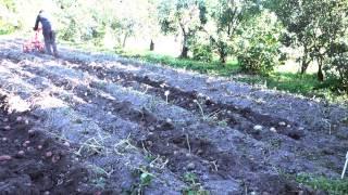 �������� ���� Уборка урожая картошки 2015 - Мотоблок Салют 100 ������