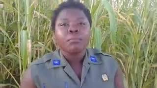 Vérité polele polele RDC tokosuka wapi