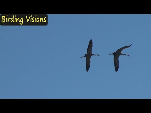 Birds Of The Hula Valley - Israel