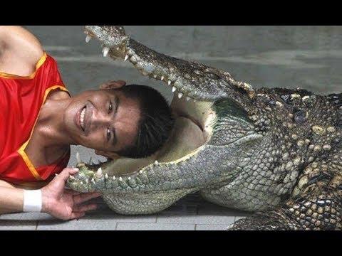 Hót với màn xiếc với cá Sấu và cô gái hấp dẫn đi trên dây – Xiếc quốc tế – Phần 2