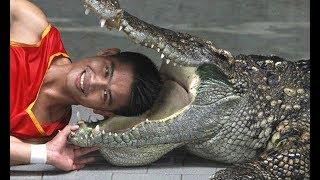 Hót với màn xiếc với cá Sấu và cô gái hấp dẫn đi trên dây - Xiếc quốc tế - Phần 2