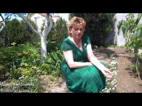 Птицемлечник выращивание , лечебные свойства