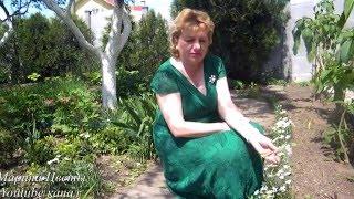 видео Птицемлечник (Орнитогалум)