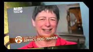 Кламбер спаниель, все породы собак, 101 dogs. Введение в собаковедение.