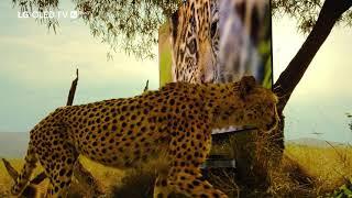 LG OLED TV und die Wunder der Natur