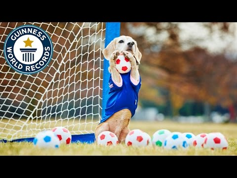 Most balls caught by a dog with the paws in one minute - Guinness World Records