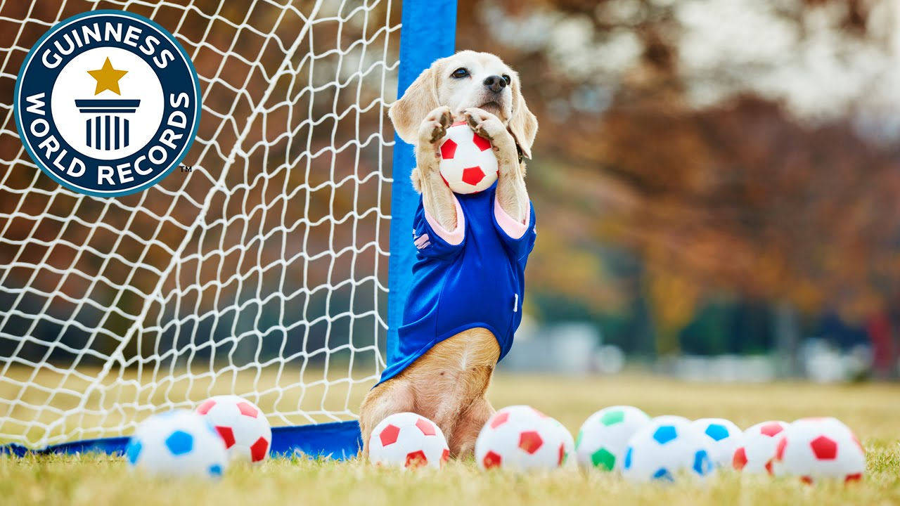National Dog Day: Here Are 10 Dogs That Broke World Records