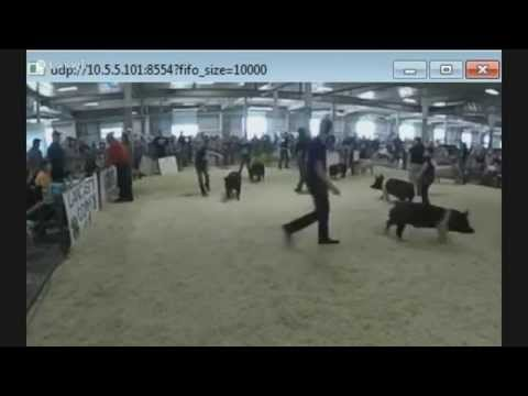 2015-lancaster-county-super-fair---4-h-&-ffa-swine-show---part-1