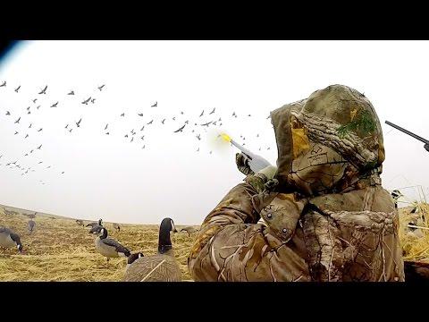 Colorado Field Goose Hunting 2017