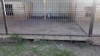 Вольер для собаки ,питомник Гарджи Хан