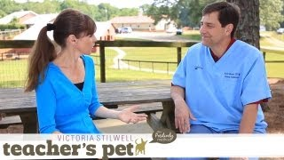 Facts About Spaying and Neutering | Teacher's Pet With Victoria Stilwell